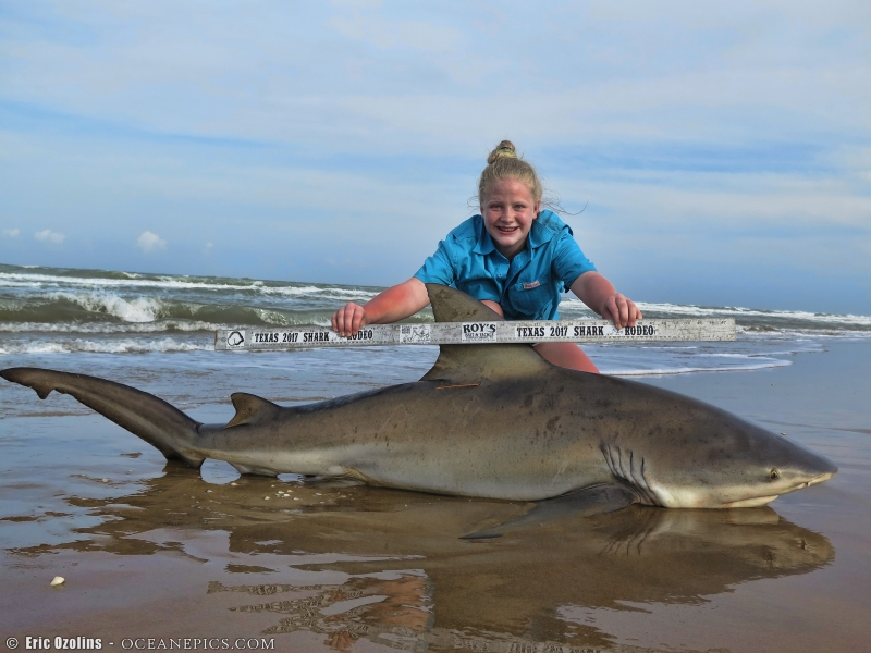 View topic oz pins shark surf for Surf fishing for sharks